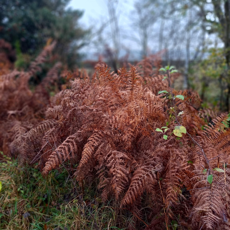 Autumn Ferns Bright Orange