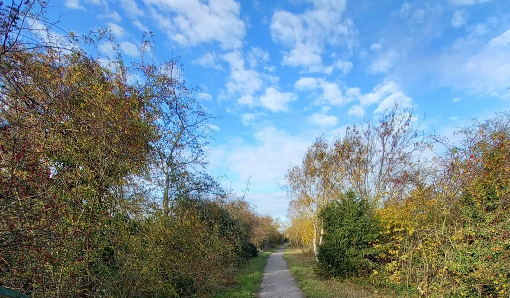 blue sky, clouds, path, trees
